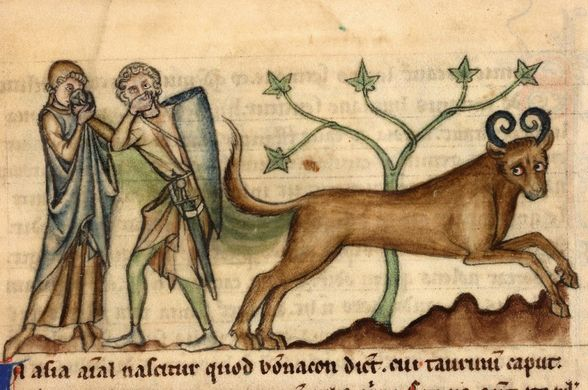 http___www.lazerhorse.org_wp-content_uploads_2014_09_Bonnacon-Medieval-Monster-surprise-1024x679